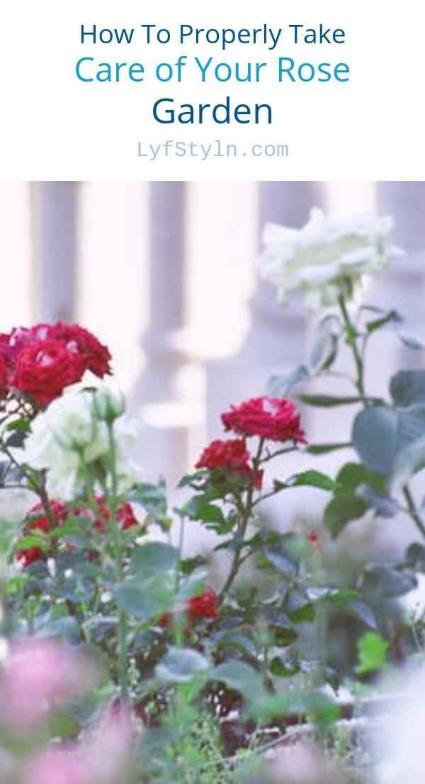 How To Properly Take Care of Your Rose Garden
