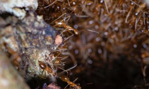 How to Take Care of Your Ant Farm